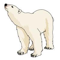 Isbjörnarna